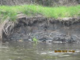 Contaminated sediments eroding into river channel