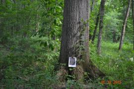 Oak and Papaw trees in Patoka River NWR and Management Area
