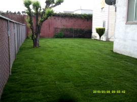 Completed sod yard