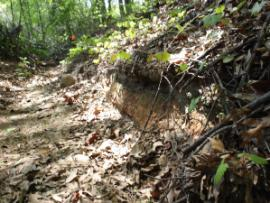 Ditch at North Corridor (430,000 ppm lead-soils)
