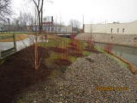 Restoration plantings in Rose Park (SA1A East bank)