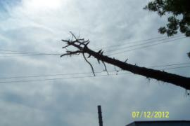 Tree lying across power lines on the site.