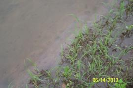 Film of whitish material (lower left to upper right) on surface of water flowing from pond into the wetlands.