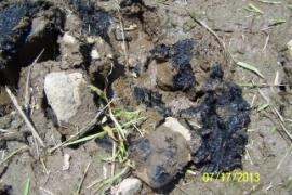 Black, oily substance that is underneath a thin layer of soil.  Material has a slippery testure and strong chemical odor.