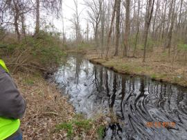 Oil in unnamed creek connected to cove attached to Lake Conway <br />Date Taken: 3/29/2013<br />Category: Site Photo<br />Latitude: <br />Longitude: <br />Tags: